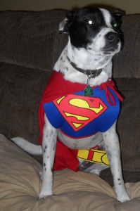 Bowie as SuperDog!
